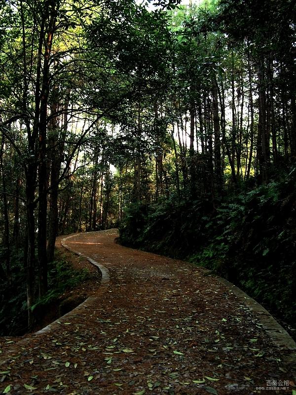 森林公园 高石梯