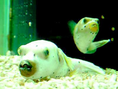 看看这些奇怪的鱼图片